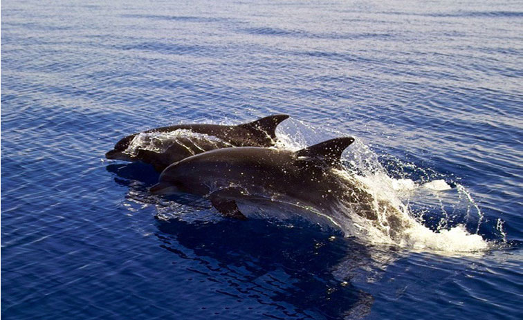 (EN) National Marine Park of Alonissos and Northern ...