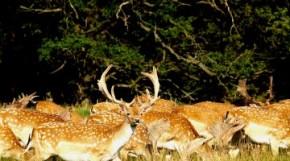 Περιβαλλοντικό Πάρκο «Μπουραζάνι»