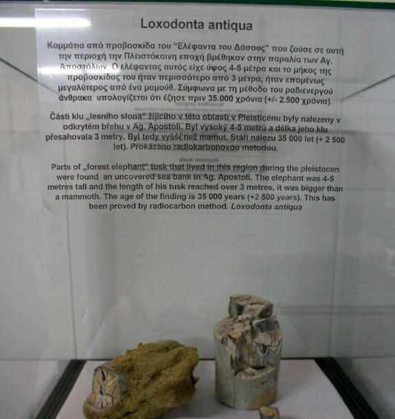 Μουσείο Φυσικής Ιστορίας Νεοχωρίου