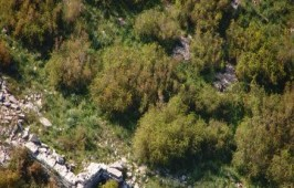 Μαστιλίτσα