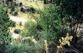 Νερόμυλος στην Ελαταριά